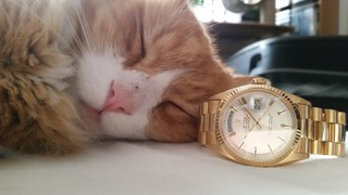 Rolex Cat | Cute Cat Pictures